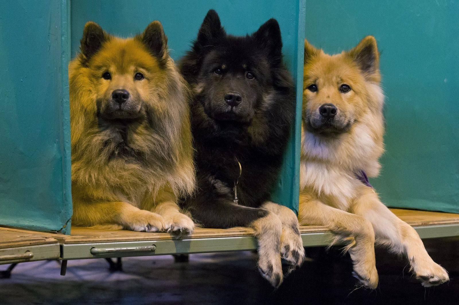 Отчёт о крупнейшей международной выставке собак: крафт-2016