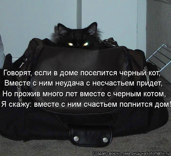 Чужой кот пришёл в дом: приметы и суеверия