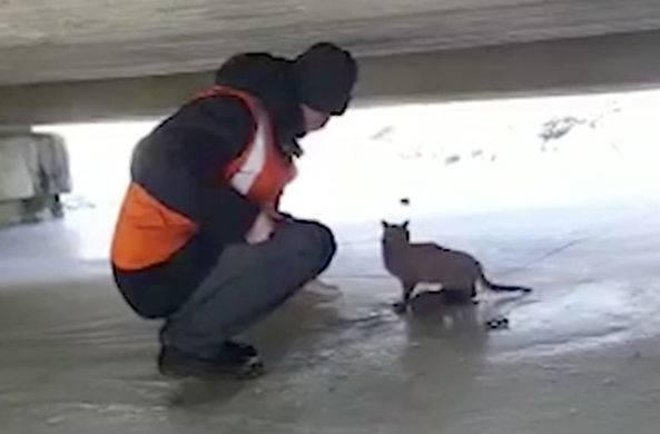 Умерла кошка-начальник вокзала в японии - korrespondent.net