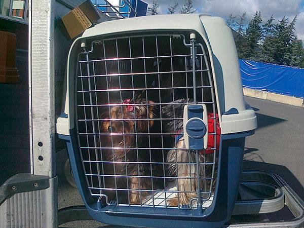 Правила перевозки собак в самолете по россии, за границу