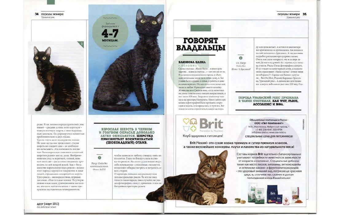 Немецкий рекс: описание породы кошек, характер, отзывы (с фото)