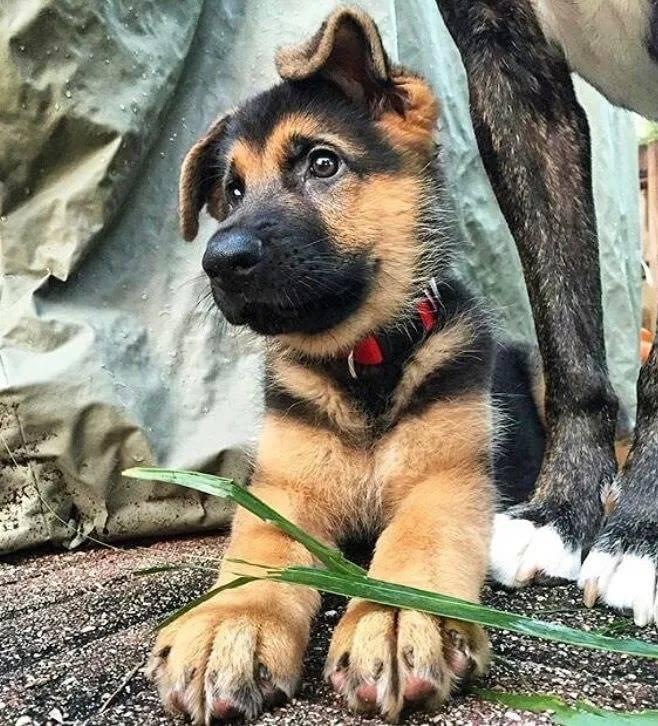 Клички для собак-мальчиков: красивые собачьи имена. как можно назвать щенка? легкие и редкие клички для кобелей, прикольные и необычные мужские имена со значением