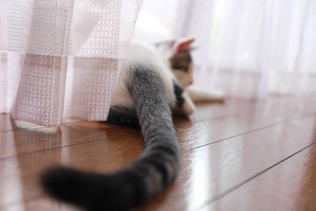 Почему кошка дрожит всем телом - причины и что делать - kotiko.ru