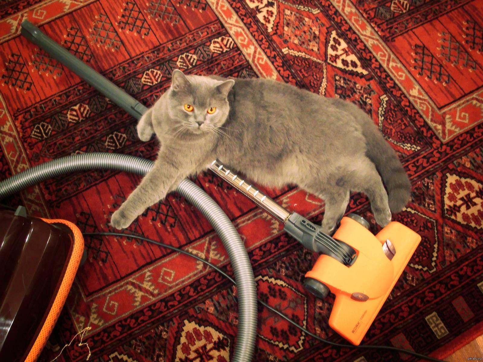 Неприятный запах от кошки: пахнет ли здоровая кошка, источники неприятного запаха, правила гигиены и здорового питания