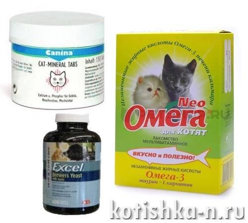 Кошки, как правильно давать кошке витамины, специализированные витаминные комплексы