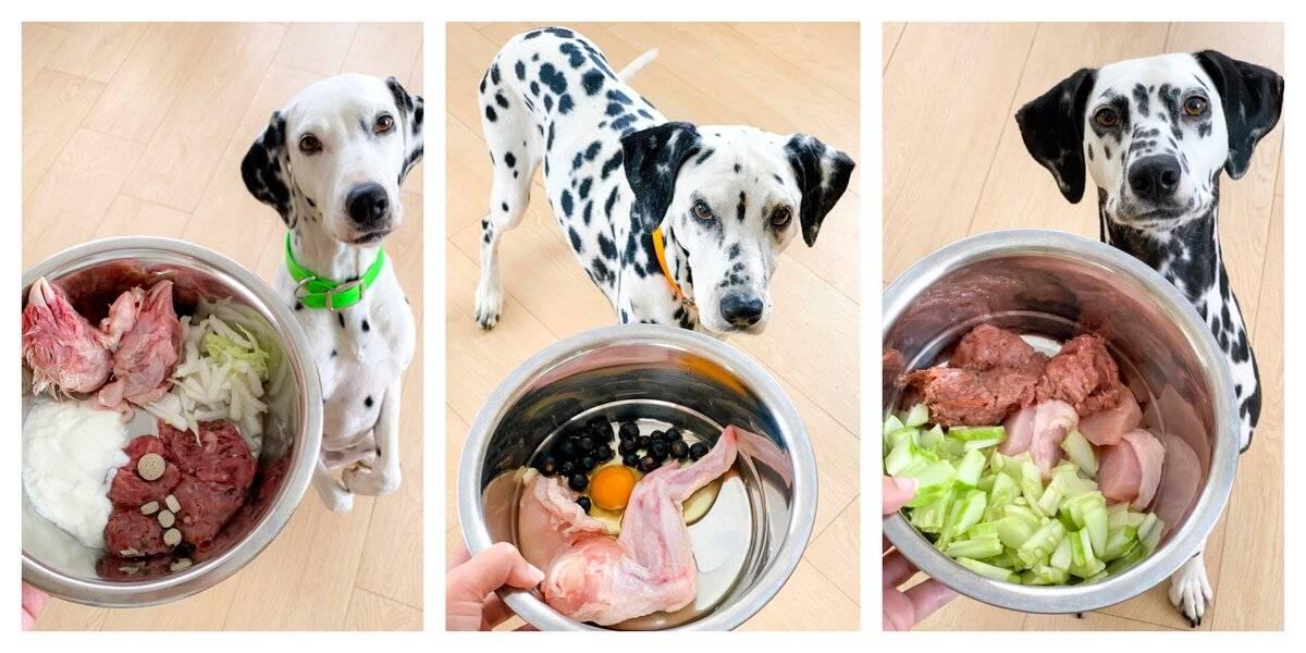 Когда кормить собаку до или после прогулки, через сколько после еды можно выгуливать
