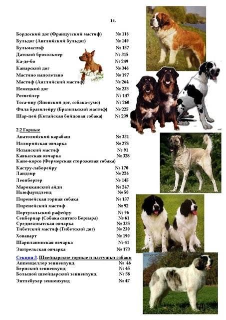 Породы собак по классификации кинологических организаций: перечень групп