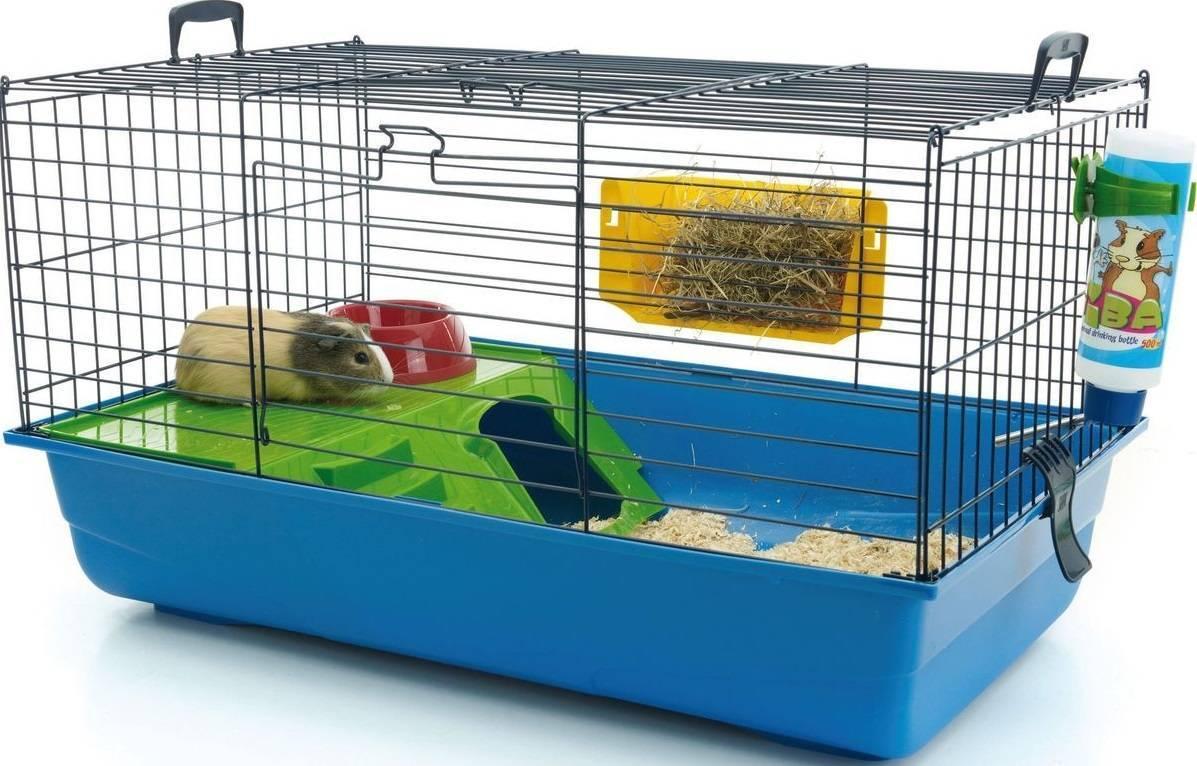 Содержание и уход за морскими свинками в домашних условиях (54 фото): при какой температуре нужно их содержать? плюсы и минусы содержания морских свинок, советы для начинающих