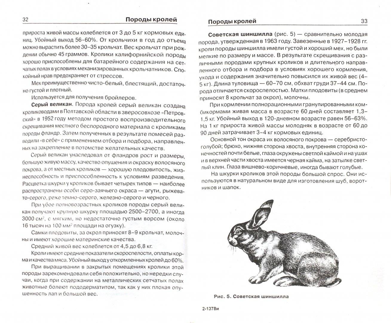 Кролик серый великан: описание породы и особенности разведения