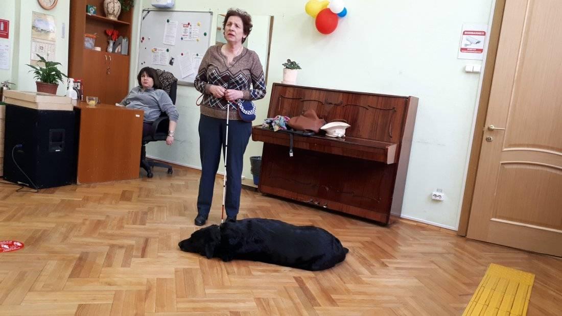Топ-36 лучших собак для квартиры