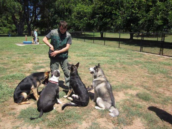 Общий курс дрессировки собак без тренера
